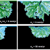 Numerical modelling: Delta dynamics under rising sea level: Liang et al. (in press)