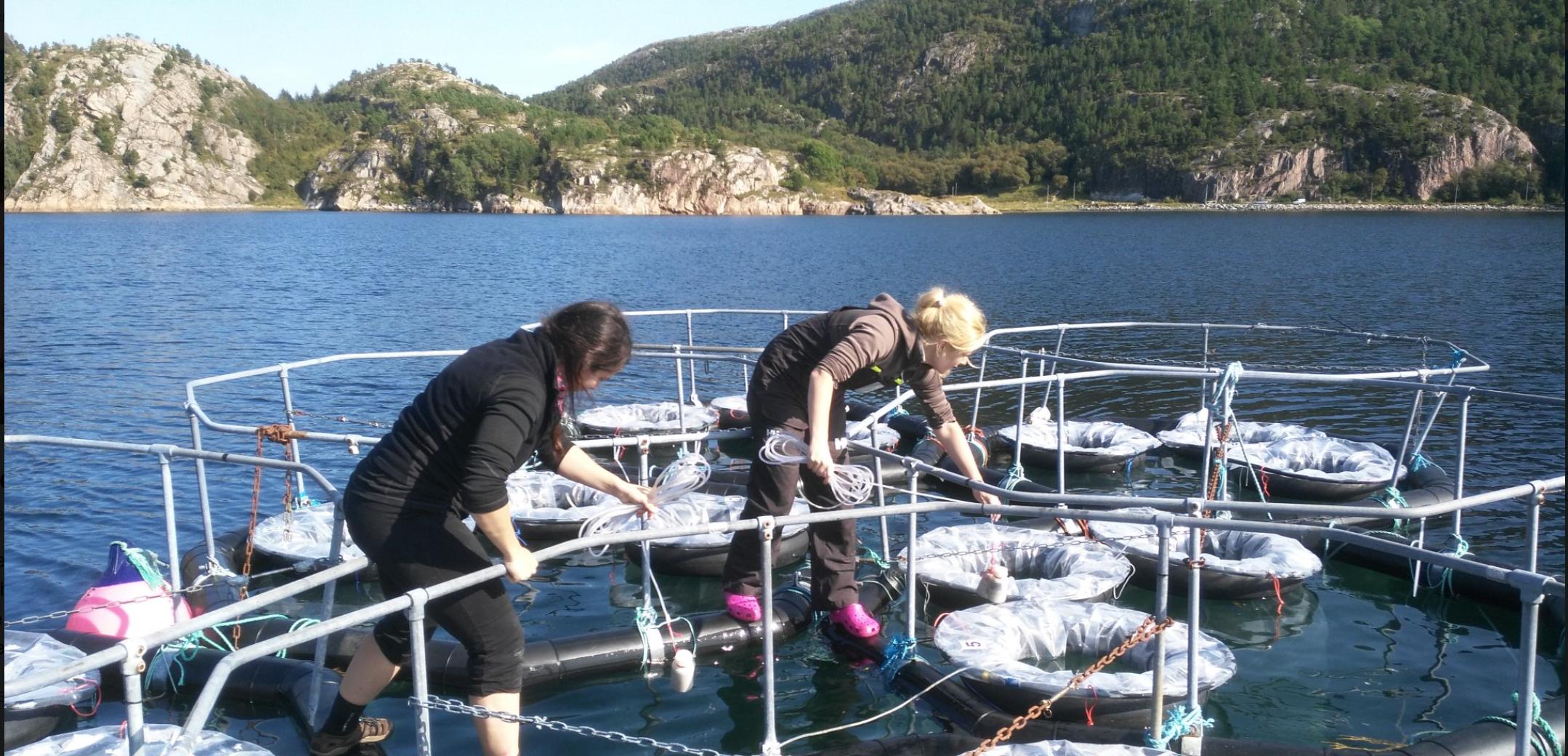 Picture 4 : Mesocosm bags after deployment © M. M. Stockenreiter, Luna Benitez Requena, Sabine Schultes and Patrick Fink